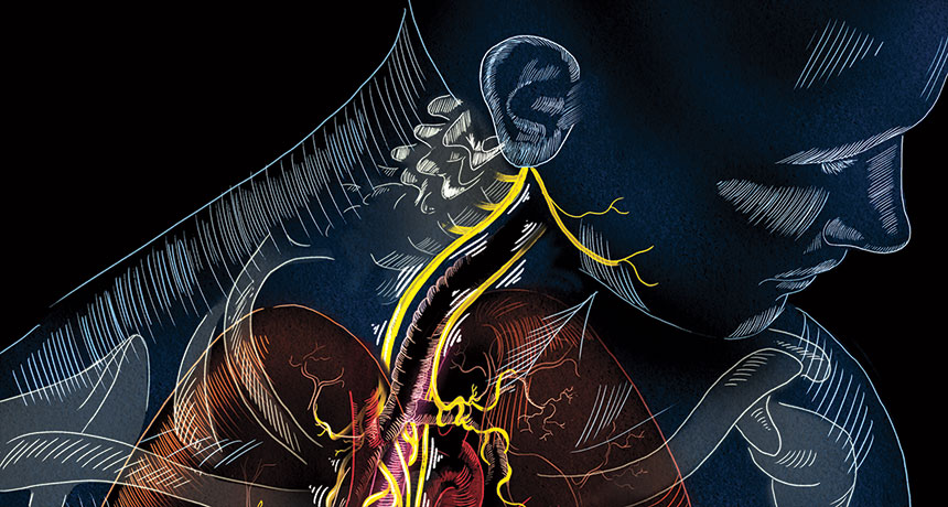 Viva Vagus Wandering Nerve Could Lead To Range Of Therapies
