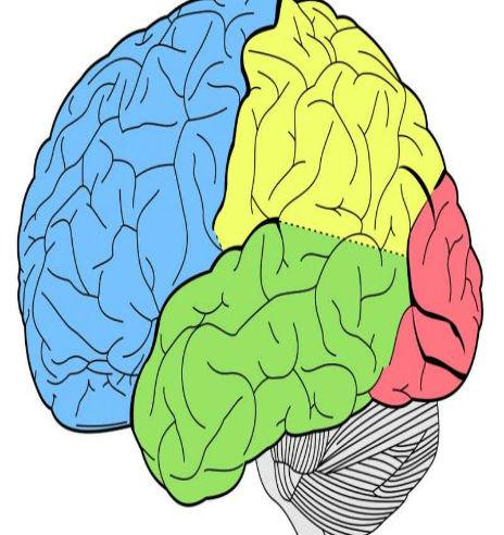 1-brain